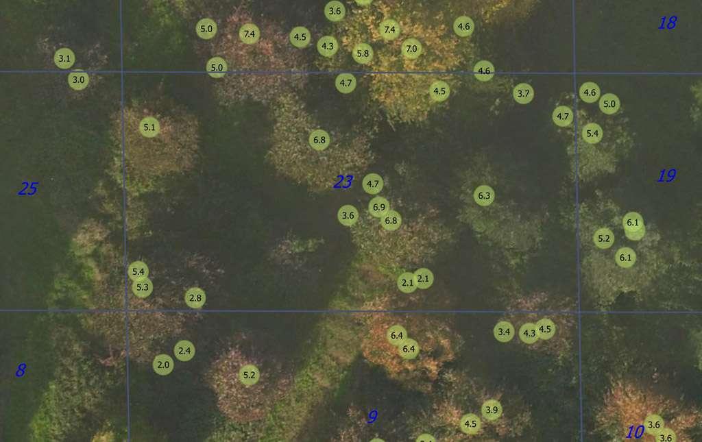 Points Maxima et hauteurs sur Bois