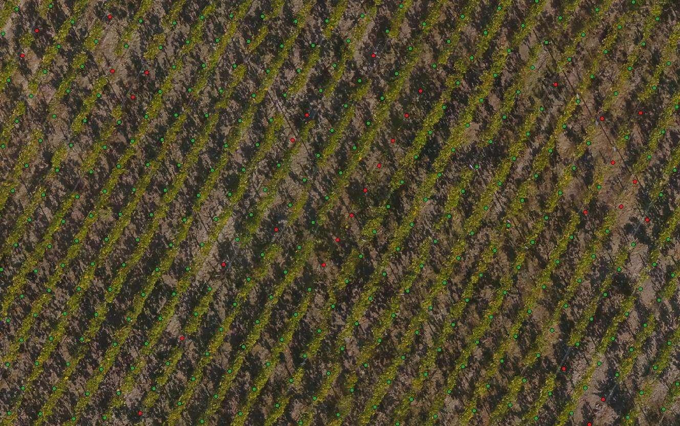 Comptage Vigne avec Pieds Manquants : Détail