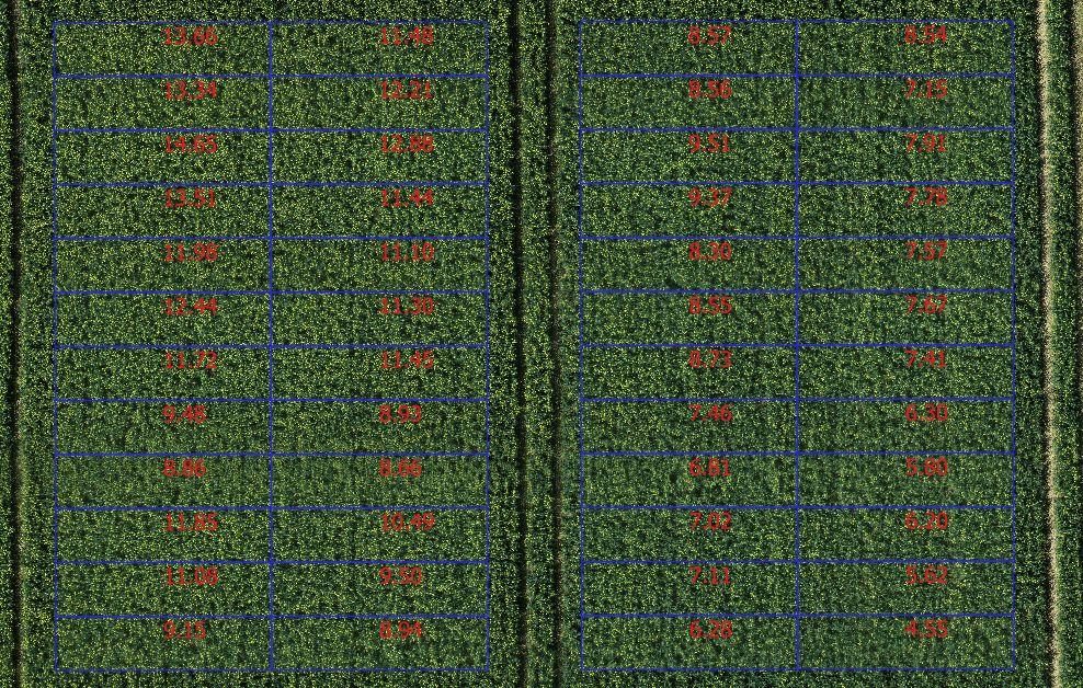 Couverture Florale Colza (%)